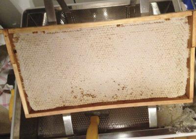Honigwabe vor dem Entdeckeln
